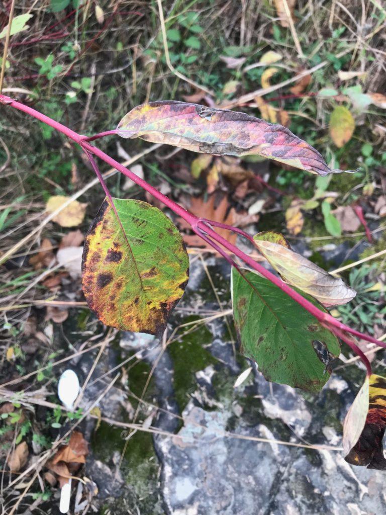 Plant Identifications
