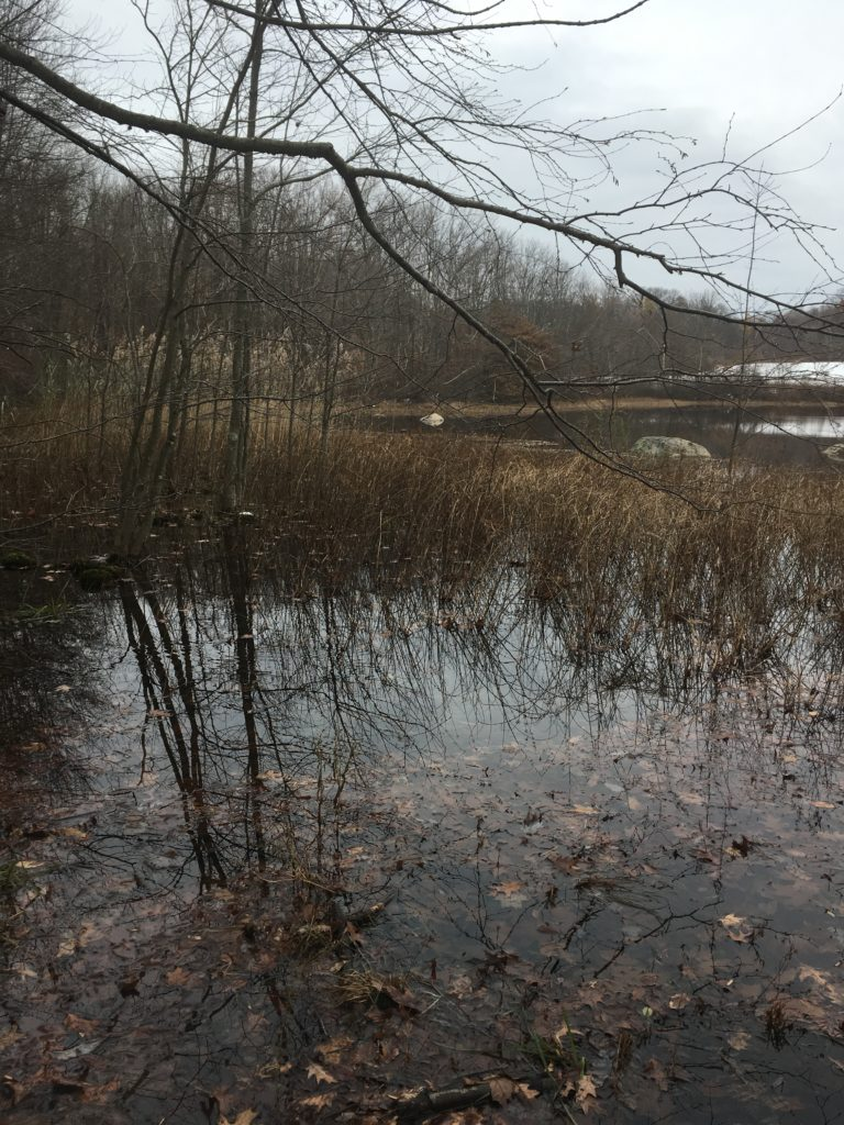 Phenology on the Road- Brushwood Pond, NJ
