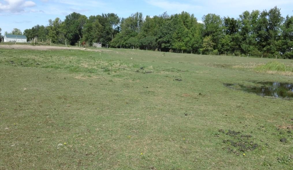 Tired pasture