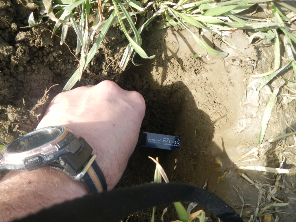 Soil moisture sensors can help manage grazing