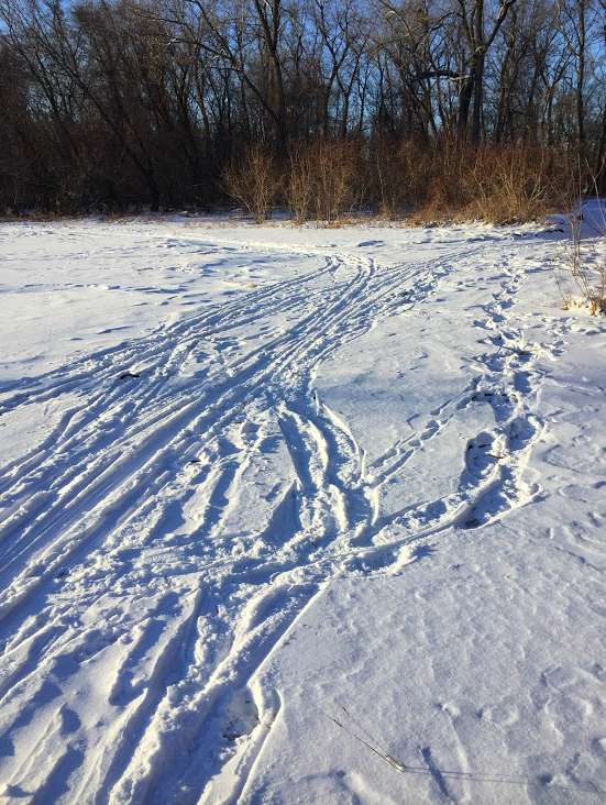Wildlife Tracks 2/5/18