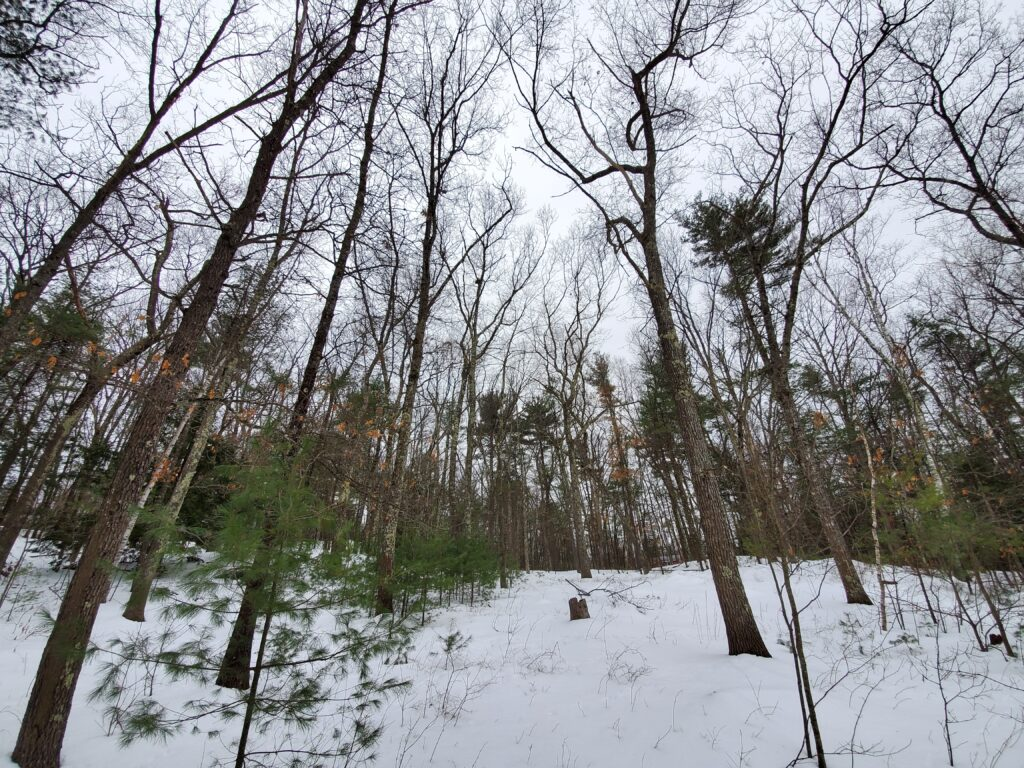 Comparison of Woody Species and Animals of Spring Temporary Spot to UVM Spot