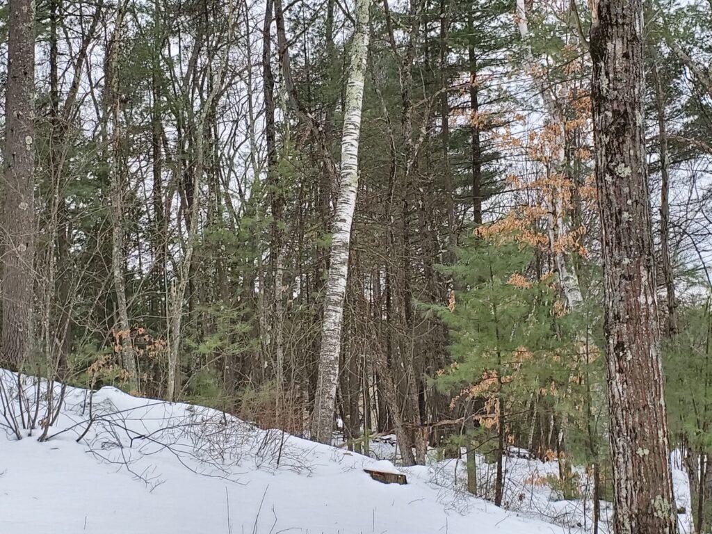 Natural History of Spring Temporary Spot