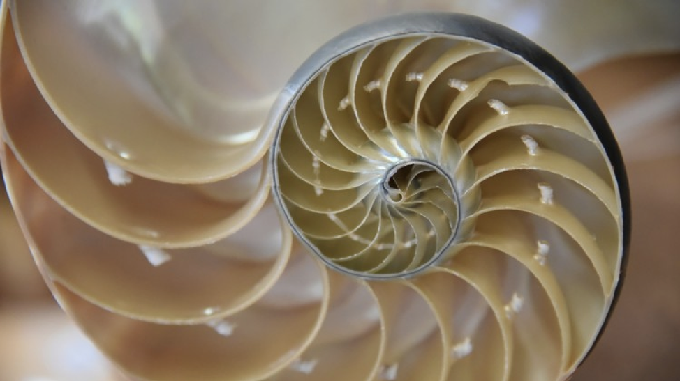 Biomimicry: Learning from Nature's Innovation