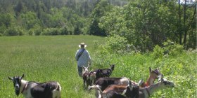 Picture of Farmer Yves Gonnet with his Goats at the Farm's New Location