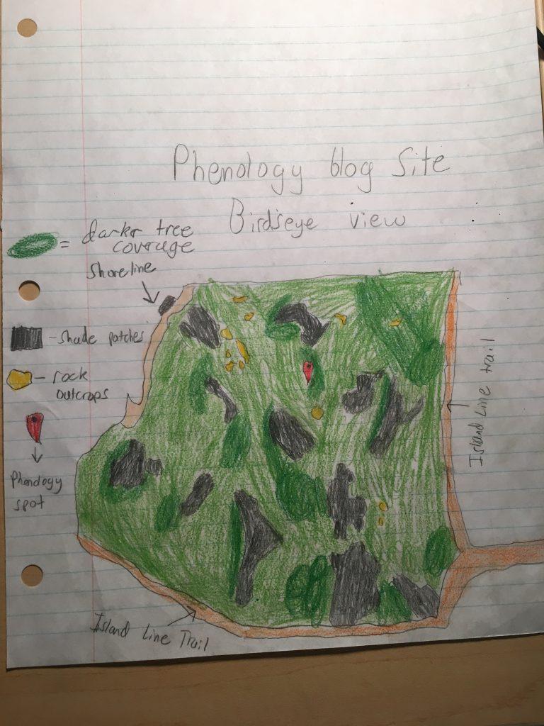 Phenology Map- Tucker Diveley