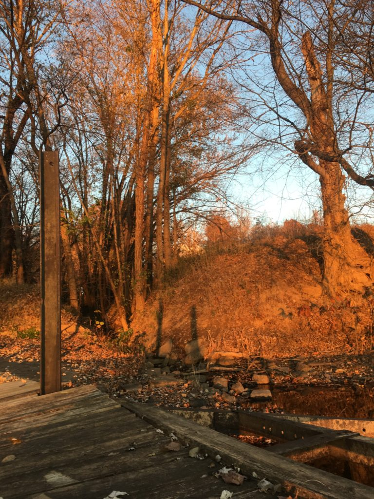 Phenological site (Spring Break)