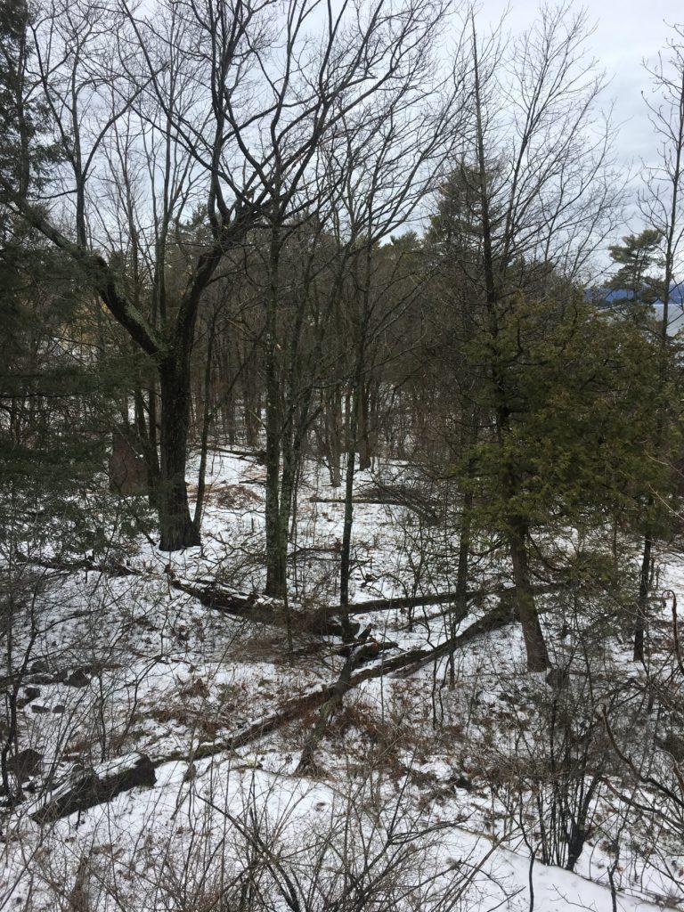 Landscape Ecology- Tucker Diveley