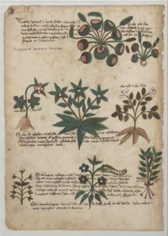 Italian herbal