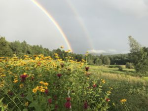 fields and flowers with rainbow