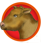 pet-cow-1