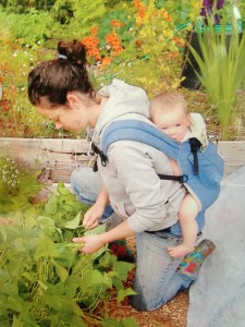 woman picking beans with baby in carrier on her back.