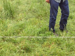 This may look like too much grass, but don't forget that the livestock UNDERground need to be fed, too!