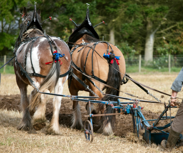 Mechanizing your farm--yes, no, maybe?