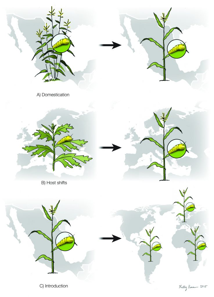 Crop domestication, global human-mediated migration, and the unresolved role of geography in pest control