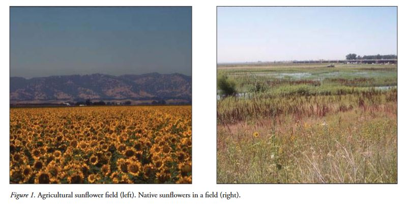 A case study for teaching - Unintended Consequences of Plant Domestication on Plant-Insect Interactions